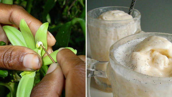 At left, vanilla has no natural pollinators in Madagascar so it is pollinated by hand. At right, vanilla milkshakes.