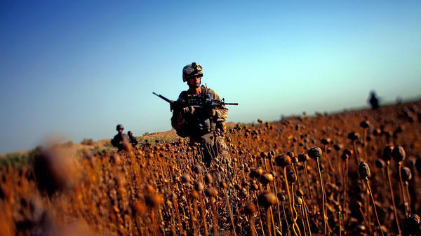 Marines patrol with Afghan forces through a harvested poppy field in Helmand province.