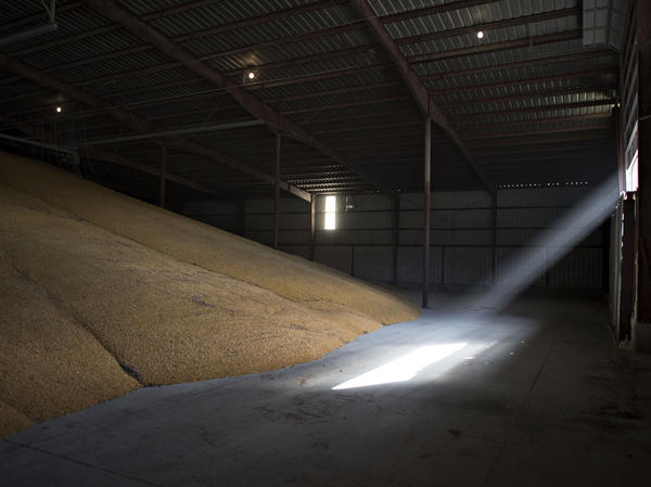 Sunlight streams into a corn storage building at a Michlig Grain storage facility in Sheffield, Illinois, U.S., on Oct. 31, 2014. The price of corn has been falling for months.