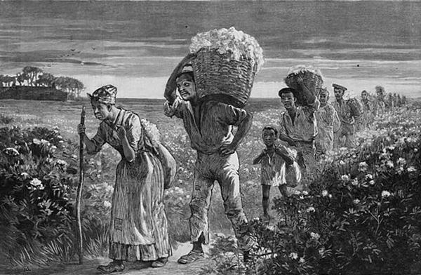 """""""A day's work ended,"""" drawn by Matt Morgan, depicts African Americans bringing cotton in from a field in Alabama. The image was published in Frank Leslie's illustrated newspaper in 1887. (Wikimedia Commons)"""