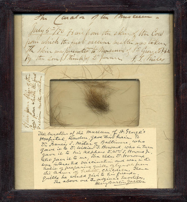 """In the center of this wooden frame are clippings of the hair of the cow named """"Blossom,"""" the source of the cowpox used by Dr. Edward Jenner in his work on the smallpox vaccine."""