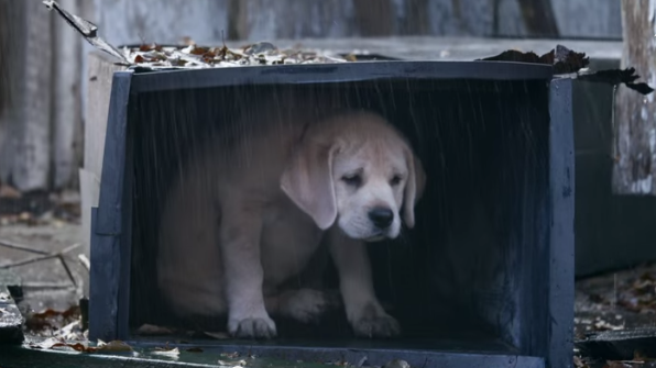 A stranded puppy sits in the rain. Don't worry, though: He's saved by horses.