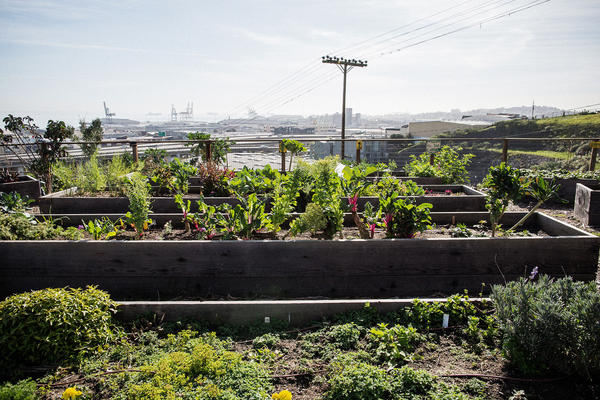 The community garden in the public housing complex in Potrero Hill overlooks the bay.