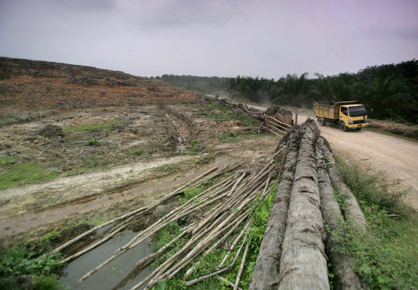 A truck passes the barren land of a former palm oil plantation that is to be replaced by forest in Aceh Tamiang, an area inside Sumatra's Leuser Ecosystem. The 6.5 million-acre area is an important part of the orangutans' habitat. But it is threatened by palm oil plantations, mining and logging.