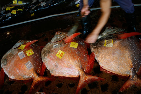 The Naha fish market in Okinawa provides fresh food for most of the island.