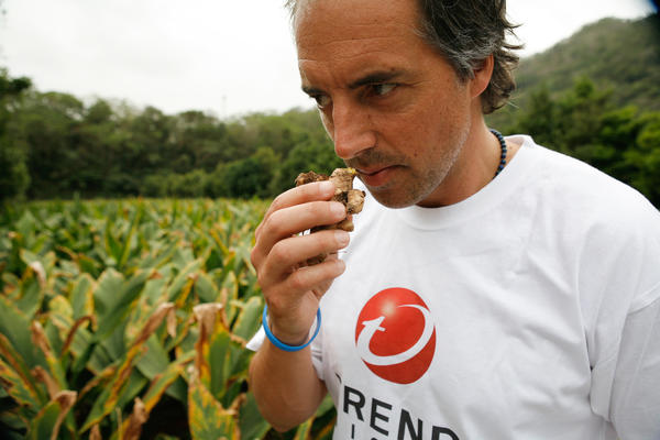 Author and National Geographic explorer Dan Buettner sniffs ginger's golden cousin, turmeric, which figures prominently in the Okinawa diet as both a spice and a tea.