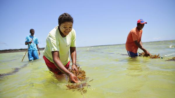 A woman cultivates seaweed off the coast of Madagascar to counter overfishing. She's working with Blue Ventures, a business that supports its conservation projects by giving ecotours.