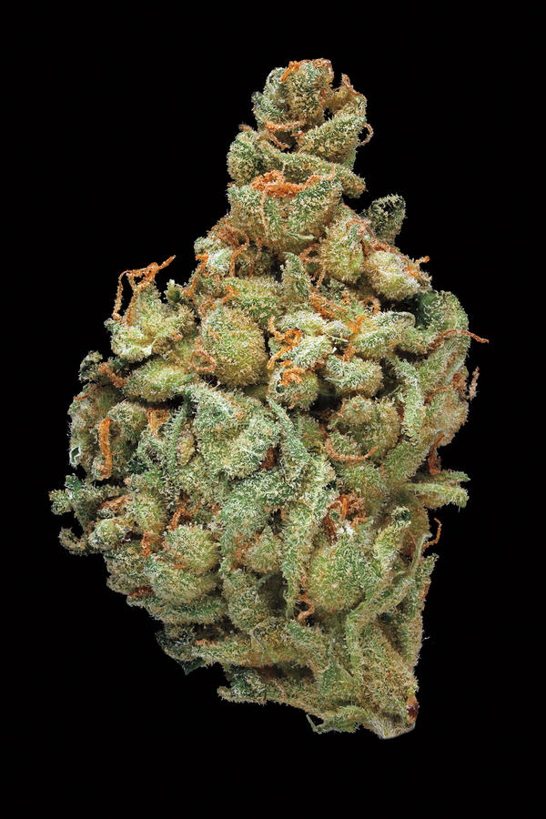 Sour Amnesia. Smell/taste: spicy, fuel, skunky. Common effects: energetic, uplifting, cheerful. Top medicinal uses: fatigue and mood enhancement.
