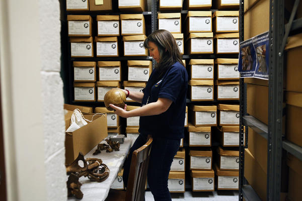 Dr. Dawnie Wolfe Steadman, director of UT's Forensic Anthropology Center, examines a skeleton in the Bass Donated Skeletal Collection.