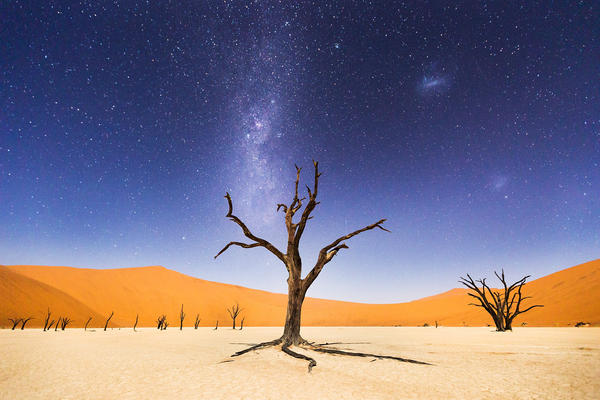 """The night before returning to Windhoek, we spent several hours at Deadveli. The moon was bright enough to illuminate the sand dunes in the distance, but the skies were still dark enough to clearly see the Milky Way and Magellanic Clouds. Deadveli means """"dead marsh."""" The camelthorn trees are believed to be about 900 years old, but have not decomposed because the environment is so dry."""