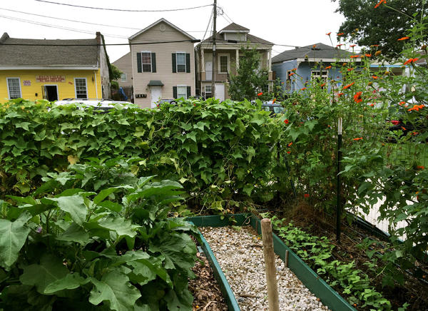 Local residents can farm plots in the ReFresh Community Garden. It's part of a health hub project established on long-vacant commercial property.
