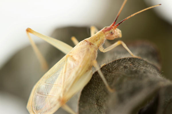 When a tree cricket rubs its wings together, tiny features of the wing rub against each other to create a species-specific chirp.