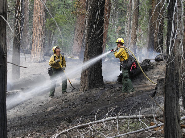 San Bernardino National Forest service fire fighter's Logan Costello, left and Andy Duran, mop up a back burn near General Grant tree at Grant Grove in Kings Canyon National Park, Calif., on Saturday.