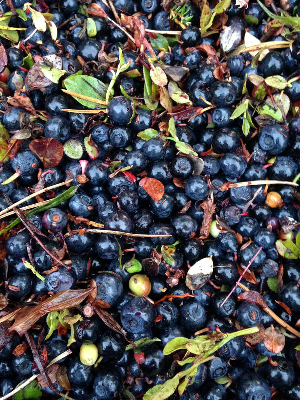 Bilberries, also known as European blueberries, grow wild in Lapland and are packed with antioxidants.