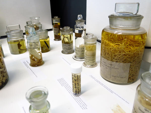 Meet some of the nightmarish parasites that live in London's Natural History Museum. Fortunately, they reside in jars.