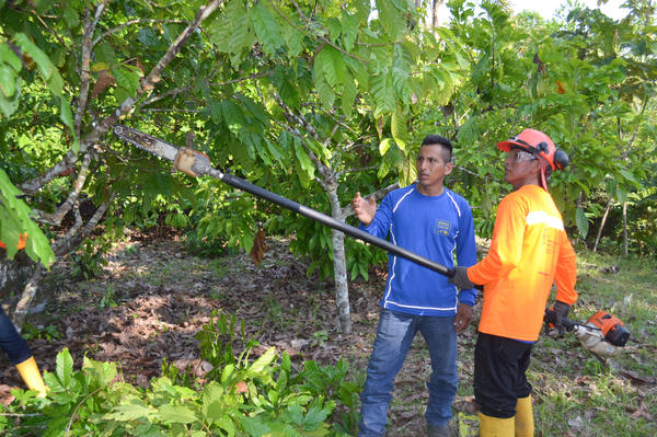 One of Minga de Cacao's pruning brigades demonstrates its work on a cacao farm along Ecuador's Aguarico River.