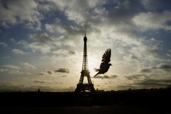 A bird flies in front of the Eiffel Tower, which remained closed on the first of three days of national mourning, in Paris on Sunday.