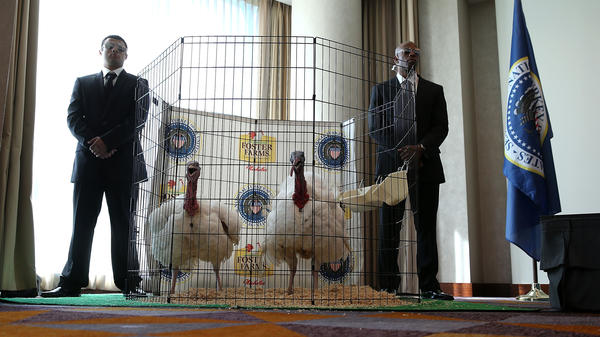 Men dressed as Secret Service agents stand guard next to Tom One and Tom Two, the 2015 turkey and alternate.