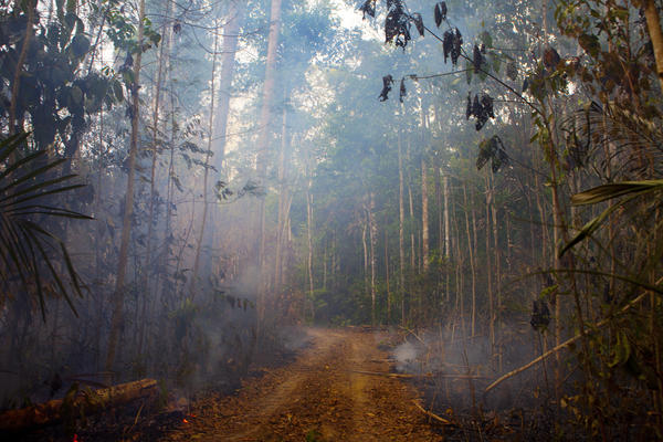 In Brazil's western state of Rondonia, a patch of the forest burns near a small farm.
