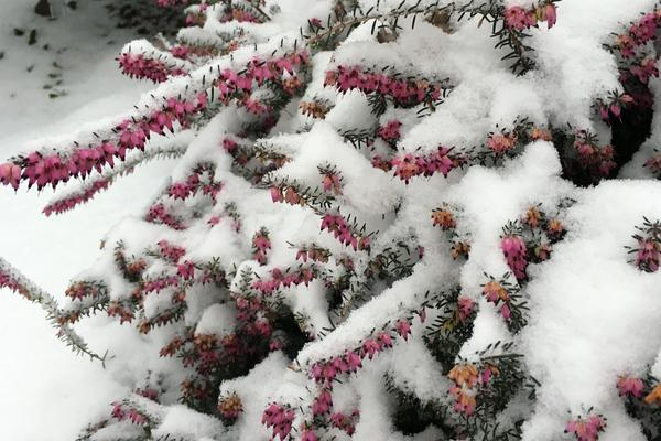 Heather is coated in snow in Washington, D.C., early in the blizzard.