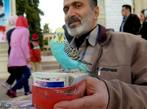 Medhi Salimian uses the words of Hafez — and the help of his bird, Sarah — to tell fortunes.