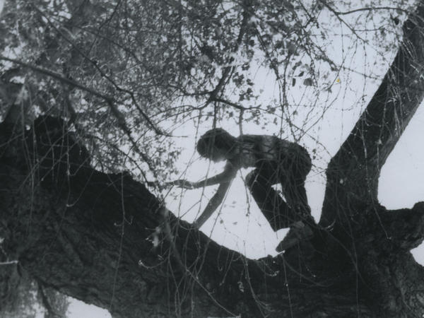 A boy climbing a tree at Treehaven.