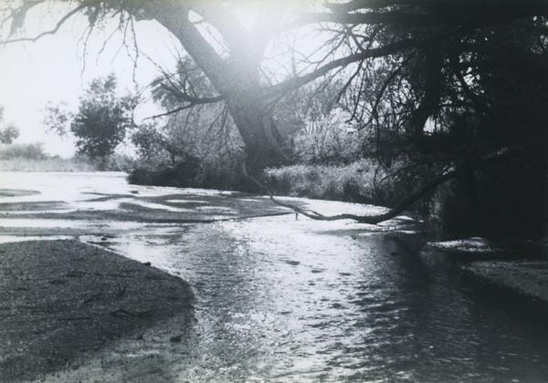 The creek outside Treehaven.
