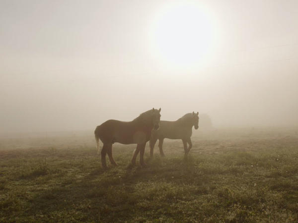 The documentary film<em> The Seer</em> looks at small farms, and farmers, with emotion.