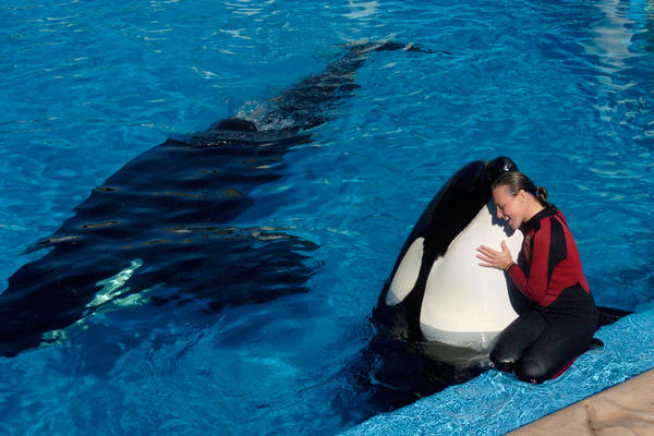 Dawn Brancheau, a trainer at SeaWorld Adventure Park, is shown performing in 2005. Brancheau was killed in an accident with an orca at the SeaWorld Shamu Stadium in Orlando, Fla., in 2010.
