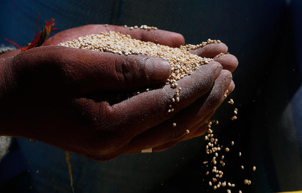 A man holds Peruvian quinoa. New studies of detailed data gathered by Peru's government find that the global quinoa boom really was good for Peruvians — both those who grow it and those who eat it.
