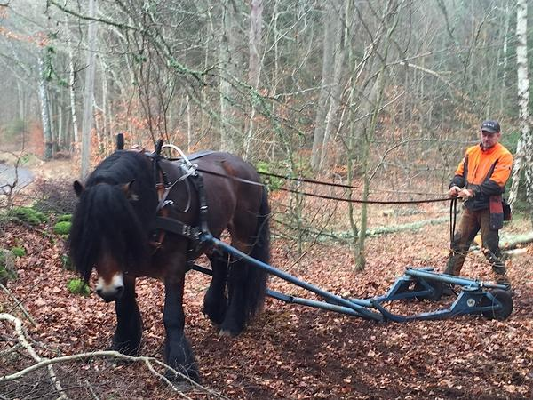 "Forester Jorgen Andersson clears trees with his horse, not a tractor. He says he'd never thought of taking an Afghan refugee as an apprentice — especially one who'd never been in a forest before. But now, he says, ""I'm happy to do that."""