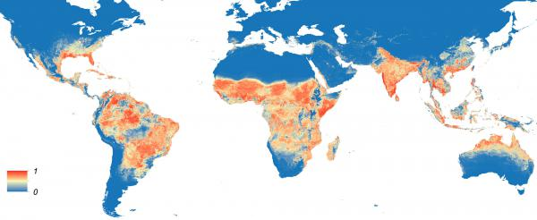 This map shows the predicted distribution of <em>Aedis aegypti, </em>the mosquito that carries Zika virus. The redder the area, the higher the probability.