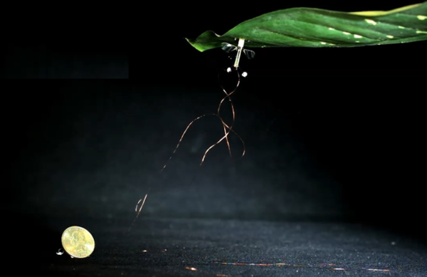 A fly-size robot perches on a leaf.