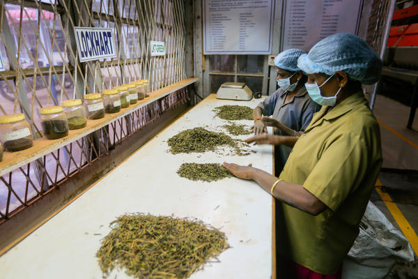Employees at the factory of the Harrisons Malayalam Ltd. Lockhart Estate in the highlands of Munnar sort dried tea leaves by size and color. Tea workers here and throughout the state benefited from the labor action initiated by the Women's Collective at the Kanan Devan Hills Plantation.