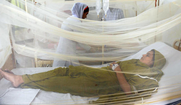 A patient suffering from dengue fever lies under a bed net in a  hospital in Lahore, Pakistan, during a 2011 outbreak of the mosquito-borne disease.