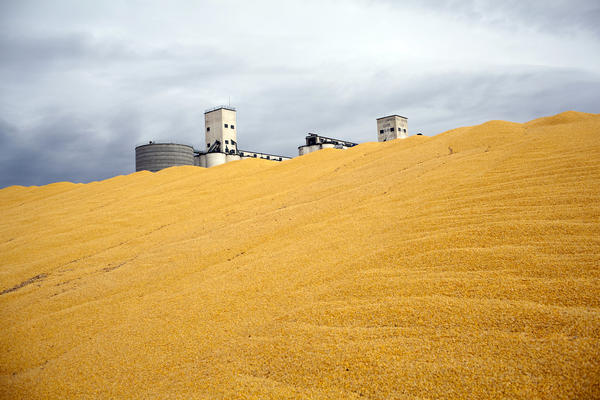 Surplus corn is piled outside a storage silo in Paoli, Colo. Do federal farm subsidies encourage the production — and perhaps overconsumption — of things that we're told to eat less of, like high fructose corn syrup or meat produced from livestock raised on subsidized grains?