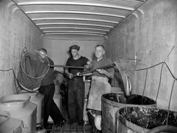 Fish are removed from the New York Aquarium in 1941, which is to be demolished as part of the construction work and improvement for the Battery-Brooklyn Tunnel in New York City.
