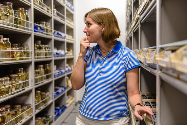 Anna Phillips, a research zoologist, is surrounded by floor-to-ceiling worms at the Smithsonian warehouse.
