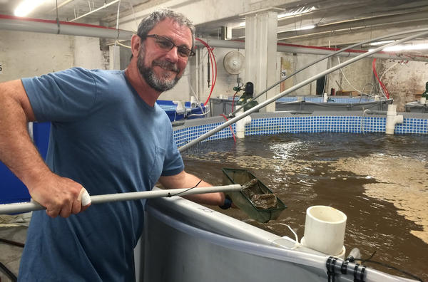 Jean Claude Frajmund, the owner of Eco Shrimp Garden in Newburgh, N.Y., is raising shrimp indoors. He is working on doubling production to 300 pounds a week.