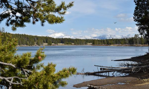 Water-based recreation is being banned along much of the Yellowstone River to help limit the spread of a parasite that appears to be killing fish.