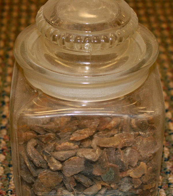 Gum believed to have been chewed by the notorious gangster John Dillinger, is on display at the History of Pharmacy Museum in Tucson, Ariz.