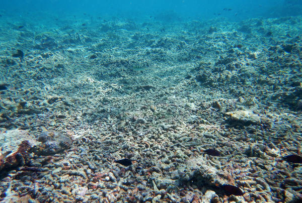 "Coral rubble remains after ""chopper"" boats killed branching corals, which were subsequently further broken up by storm waves of blast fishing."