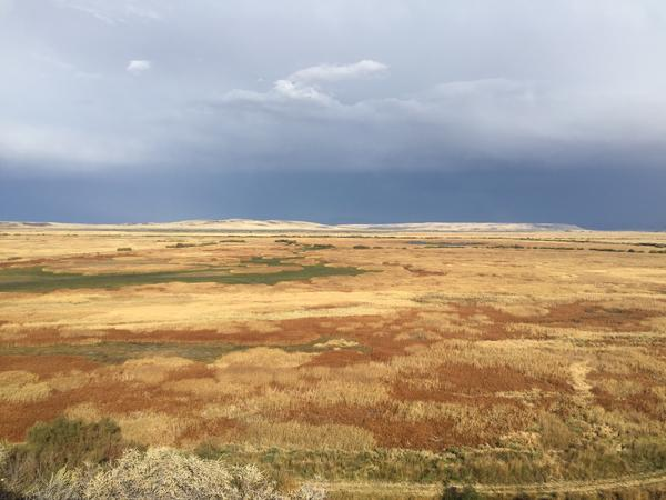 First protected by President Theodore Roosevelt, the Malheur National Wildlife Refuge is one of the most important migratory bird corridors on the U.S. West Coast. Its lush grasses and wetlands are also important for local cattle ranchers.