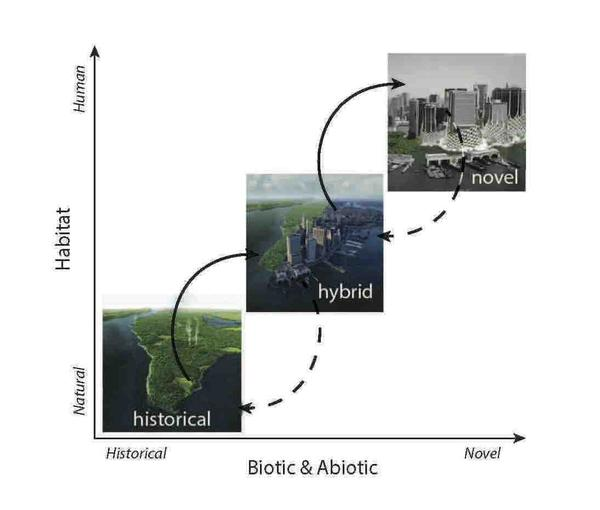 """As humans urbanize, they take ecosystems from their historical """"natural"""" state through a hybrid state and on to either outcomes they desire, in a novel resilient system, or collapse. Here we see three views of Manhattan going from its historical state to its hybrid state and on to a novel resilient state."""