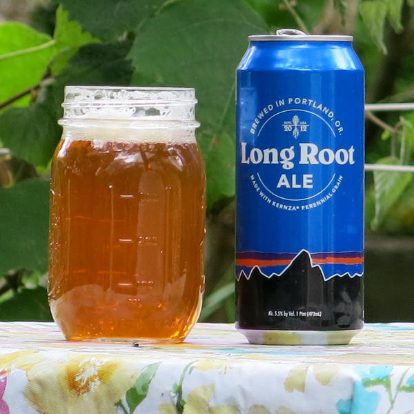 Long Root Ale is a new beer made by Hopworks Urban Brewery, in Portland, Oregon, and Patagonia Provisions, a subsidiary of the Patagonia outdoors brand. It is the fist commercially available product to use Kernza.