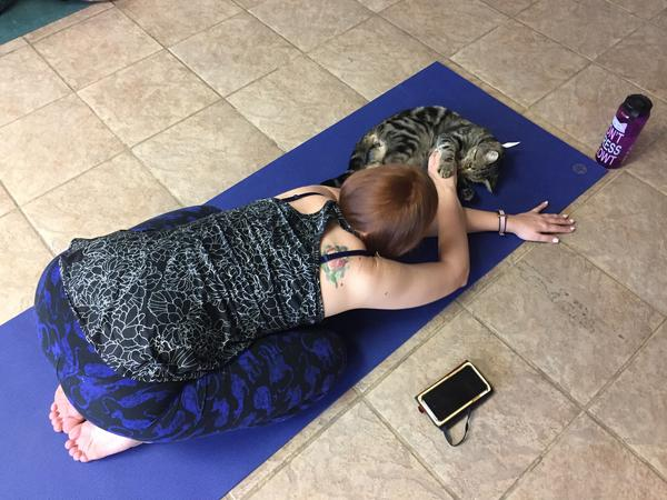 <p>Thomas has only one cat, a female ginger who doesn't like others, so the yoga class is a good way for her to enjoy the company of other cats.</p><p></p>