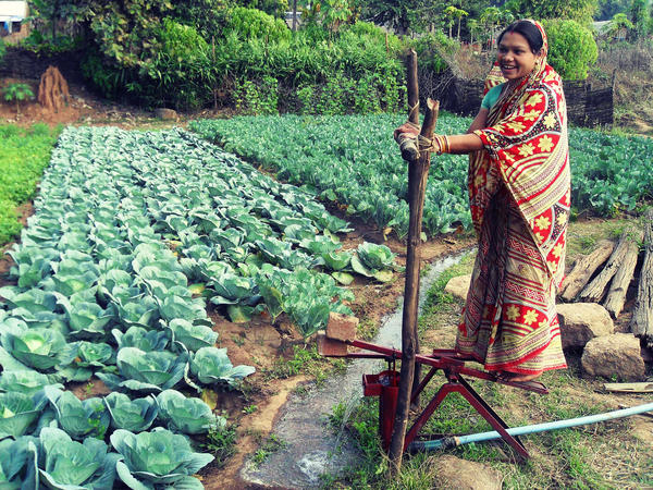 A woman uses the IDE-India foot-powered pump to suction water out of the ground and irrigate her crops.