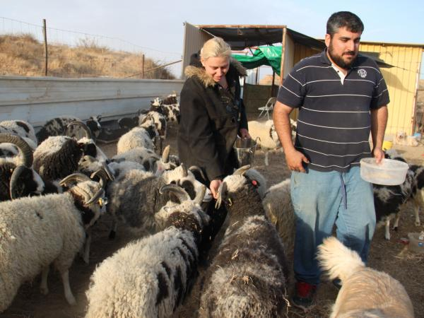 Jenna and Gil Lewinsky with their sheep under temporary quarantine in the Israeli desert. Jacob Sheep are found in the U.K. and North America, but the Lewinskys say the breed originally roamed the Middle East and ancient Israel.