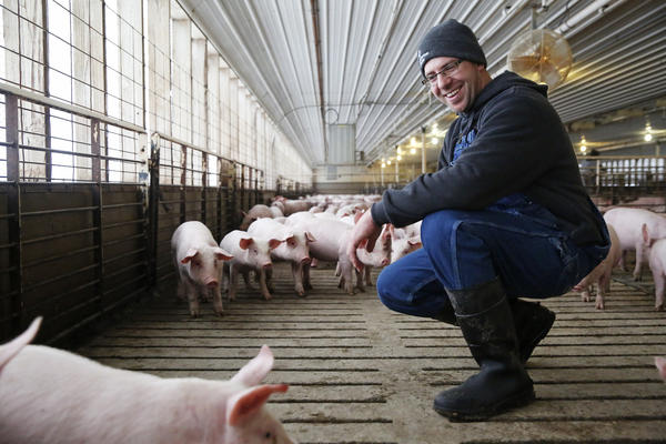 "Kress checks the pigs for signs of weakness or respiratory distress. ""[We] try to make eye contact with every animal, every day,"" he says."