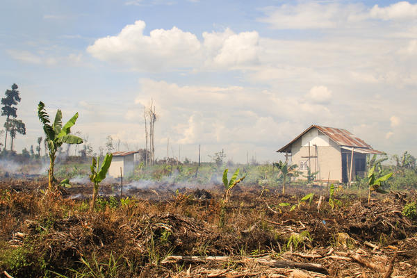 Smoke rises from smoldering fires on peat land in the village of Punggur Kecil, West Kalimantan Province. Despite being illegal, clearing peat land by fire remains widespread in Indonesia, as it is the cheapest way to clear land for agriculture and industry.